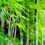 ベトナムの民謡「クアンホ」を知って、宝塚「舞音」をより深く味わってみる